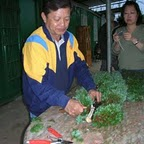 Penjing-Club-Activity